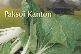 Buzzy® Xotica Paksoi Kanton